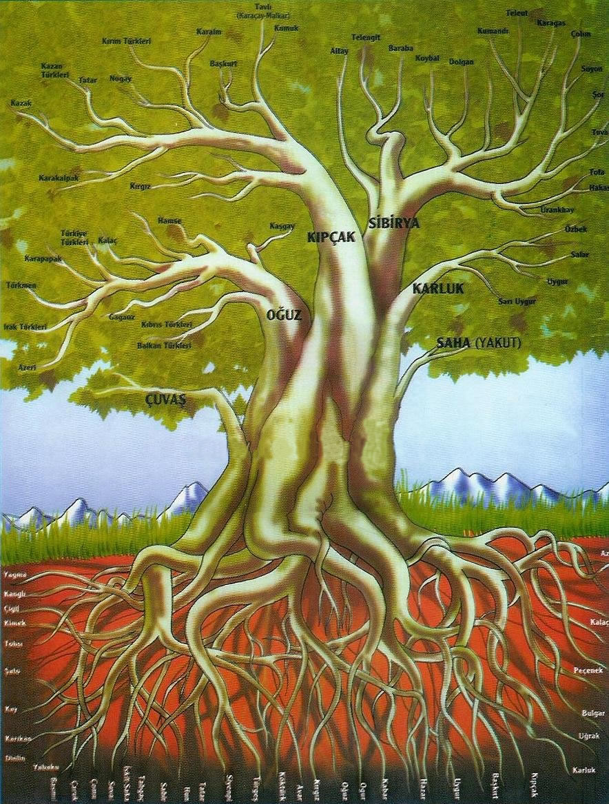 Soy Ağacımız..